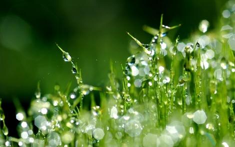 grass-macro-drops-dew-nature